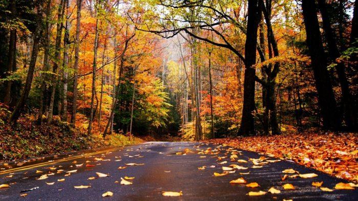 Autumn Road Fallen Leaves Nature Trees Desktop Images